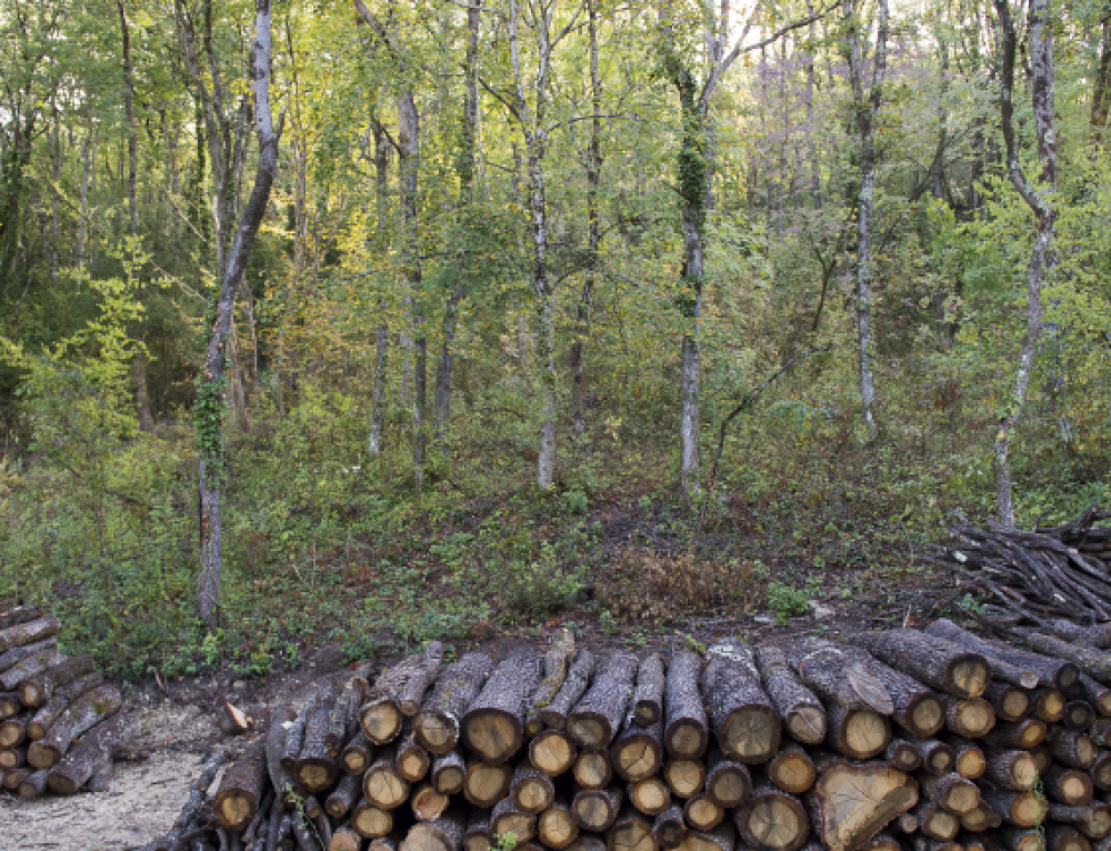 A new national storm crisis management plan for the foresty and wood sector in France.